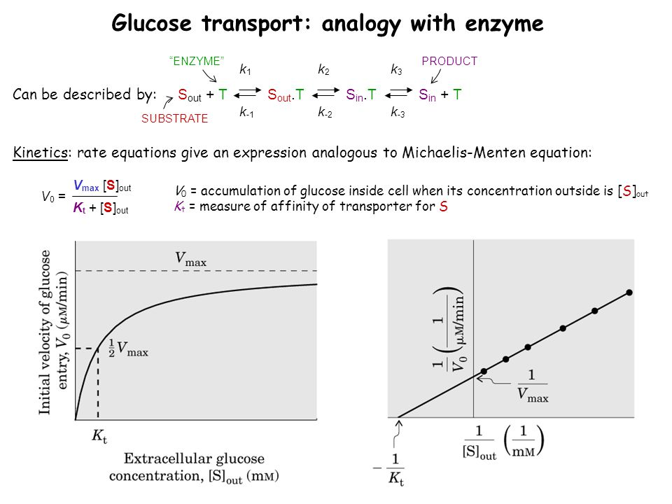 """Can be described by: Glucose transport: analogy with enzyme S out + T k1k1 k -1 S out.T k2k2 k -2 S in.T k3k3 k -3 S in + T SUBSTRATE PRODUCT""""ENZYME"""""""