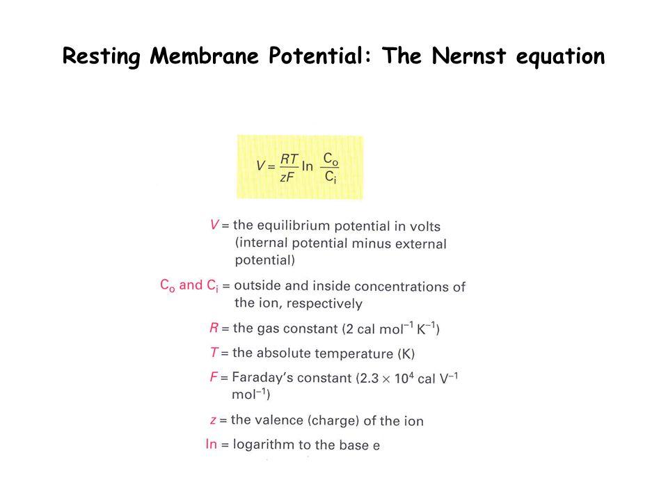 Resting Membrane Potential: The Nernst equation