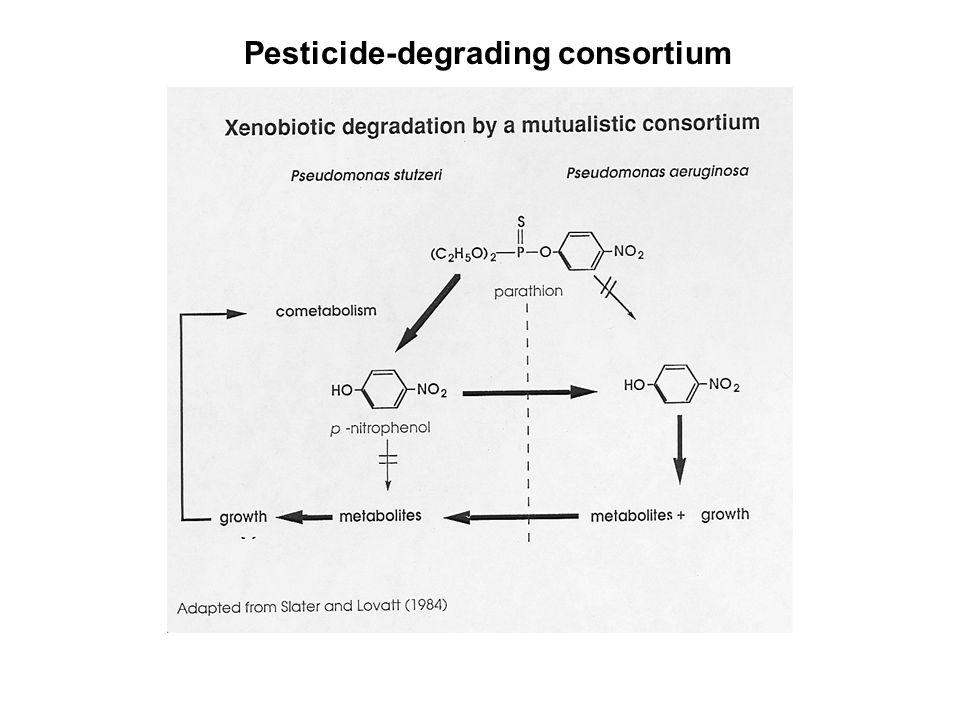 Pesticide-degrading consortium