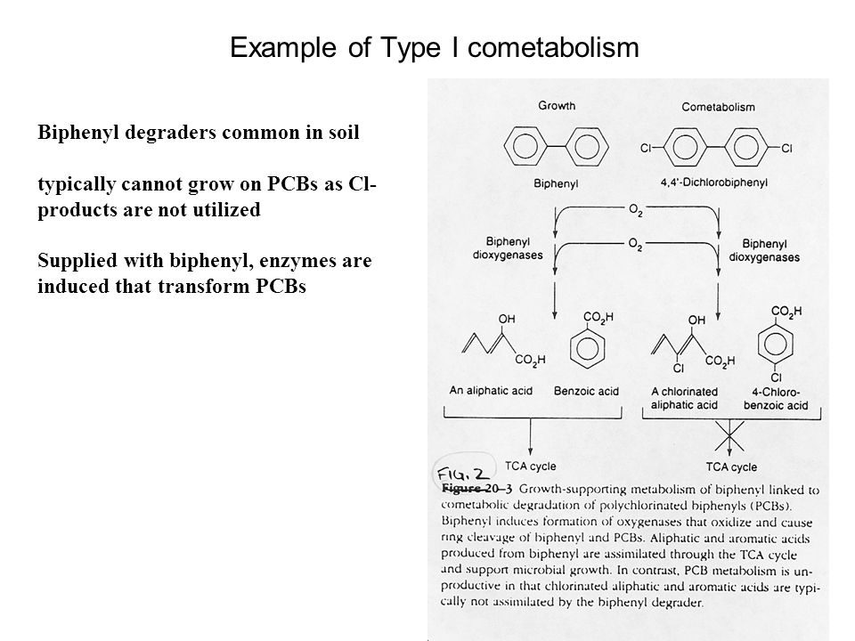 Example of Type I cometabolism Biphenyl degraders common in soil typically cannot grow on PCBs as Cl- products are not utilized Supplied with biphenyl, enzymes are induced that transform PCBs