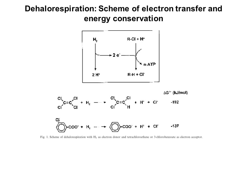 Dehalorespiration: Scheme of electron transfer and energy conservation