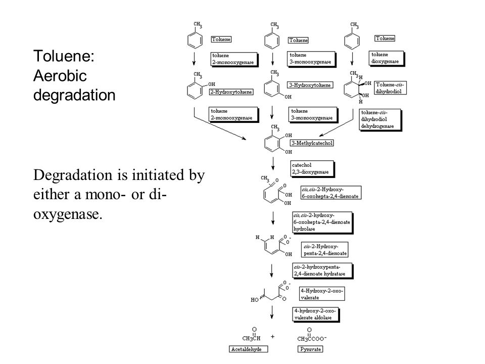 Toluene: Aerobic degradation Degradation is initiated by either a mono- or di- oxygenase.