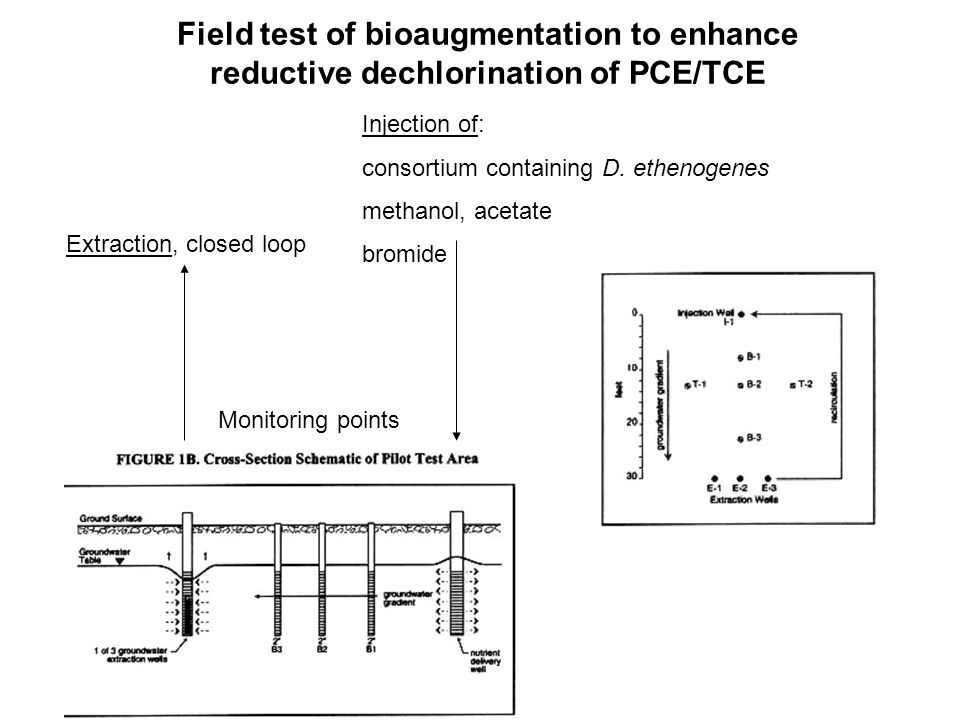 Field test of bioaugmentation to enhance reductive dechlorination of PCE/TCE Injection of: consortium containing D.