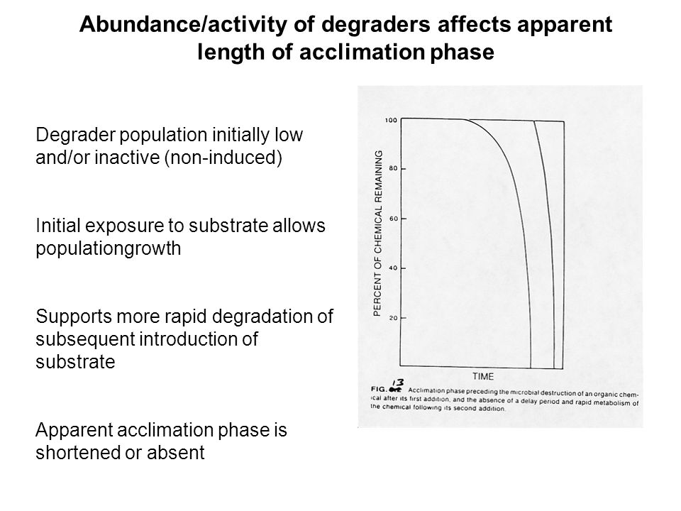 Abundance/activity of degraders affects apparent length of acclimation phase Degrader population initially low and/or inactive (non-induced) Initial exposure to substrate allows populationgrowth Supports more rapid degradation of subsequent introduction of substrate Apparent acclimation phase is shortened or absent