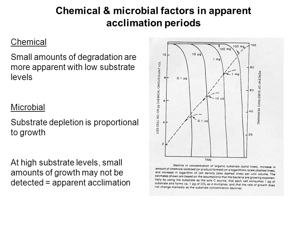 Chemical & microbial factors in apparent acclimation periods Chemical Small amounts of degradation are more apparent with low substrate levels Microbial Substrate depletion is proportional to growth At high substrate levels, small amounts of growth may not be detected = apparent acclimation