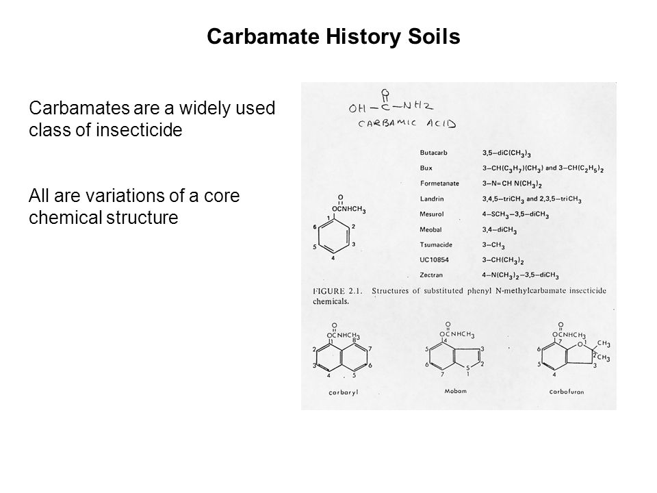 Carbamate History Soils Carbamates are a widely used class of insecticide All are variations of a core chemical structure