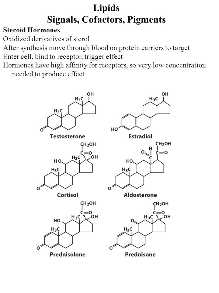 Lipids Signals, Cofactors, Pigments Steroid Hormones Oxidized derivatives of sterol After synthesis move through blood on protein carriers to target E
