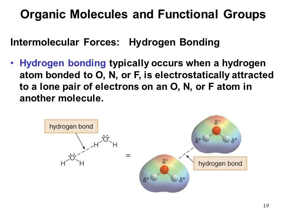 19 Hydrogen bonding typically occurs when a hydrogen atom bonded to O, N, or F, is electrostatically attracted to a lone pair of electrons on an O, N, or F atom in another molecule.