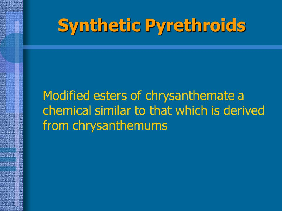 Synthetic Pyrethroids Modified esters of chrysanthemate a chemical similar to that which is derived from chrysanthemums