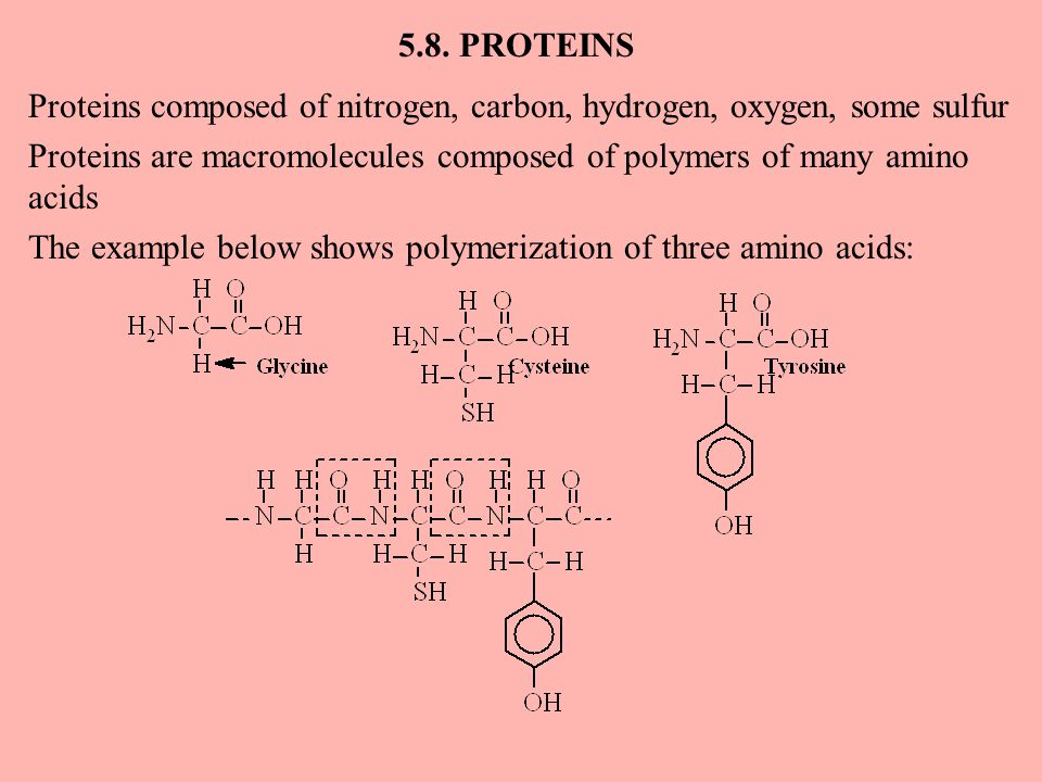 5.8. PROTEINS Proteins composed of nitrogen, carbon, hydrogen, oxygen, some sulfur Proteins are macromolecules composed of polymers of many amino acid