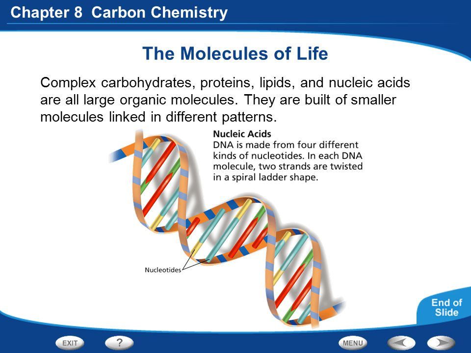 Chapter 8 Carbon Chemistry The Molecules of Life Complex carbohydrates, proteins, lipids, and nucleic acids are all large organic molecules. They are