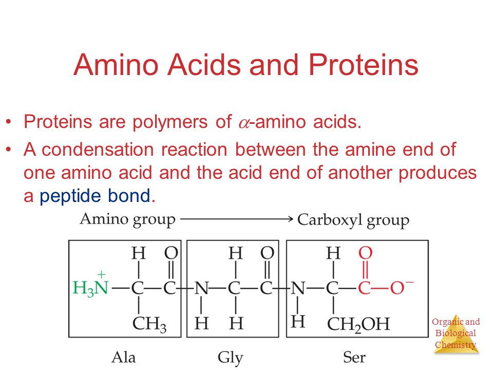 Organic and Biological Chemistry Amino Acids and Proteins Proteins are polymers of  -amino acids.