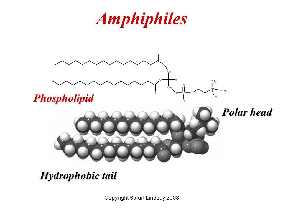 Amphiphiles Copyright Stuart Lindsay 2008 Hydrophobic tail Polar head Phospholipid