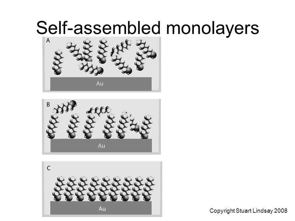 Self-assembled monolayers Copyright Stuart Lindsay 2008