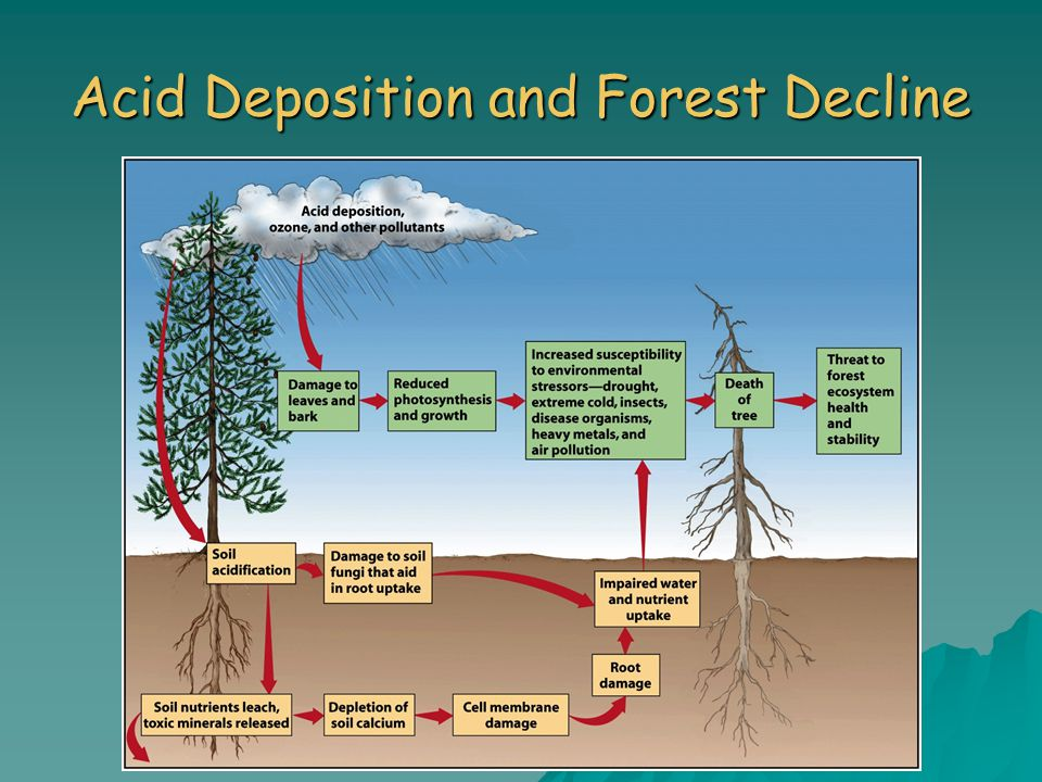 Acid Deposition and Forest Decline