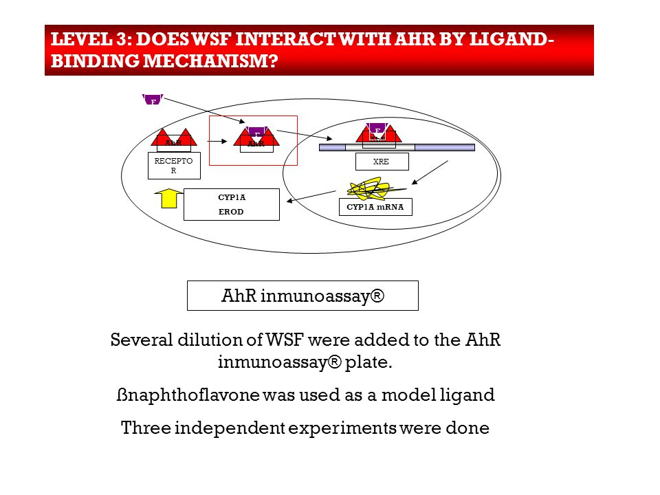 LEVEL 3: DOES WSF INTERACT WITH AHR BY LIGAND- BINDING MECHANISM.