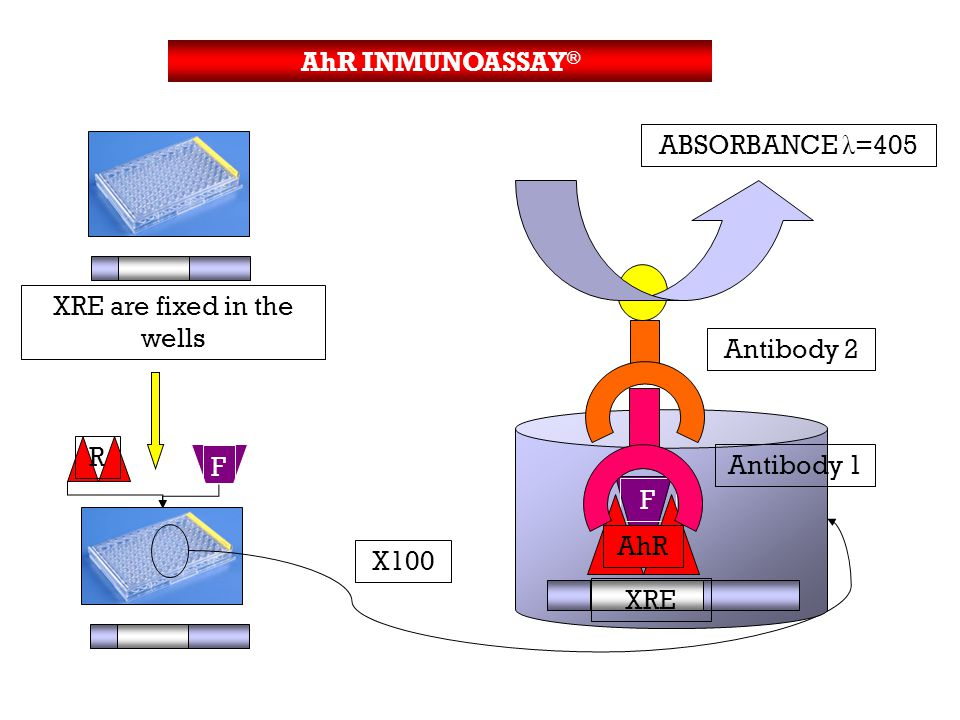 R F XRE are fixed in the wells X100 ABSORBANCE λ =405 F AhR XRE Antibody 1 Antibody 2 AhR INMUNOASSAY ®