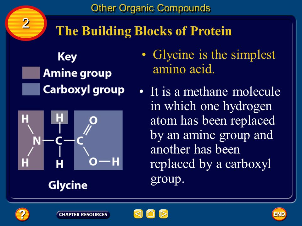 The Building Blocks of Protein Other Organic Compounds 2 2 Amino acids are the building blocks of proteins, which are an important class of biological molecules needed by living cells.