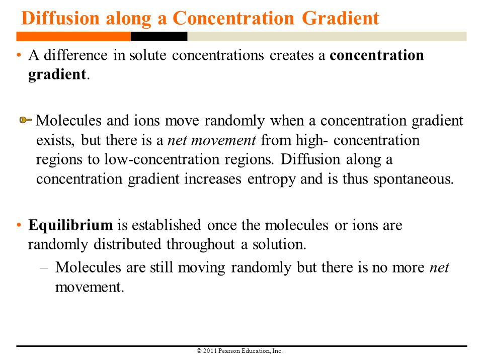 © 2011 Pearson Education, Inc. Diffusion along a Concentration Gradient A difference in solute concentrations creates a concentration gradient. Molecu