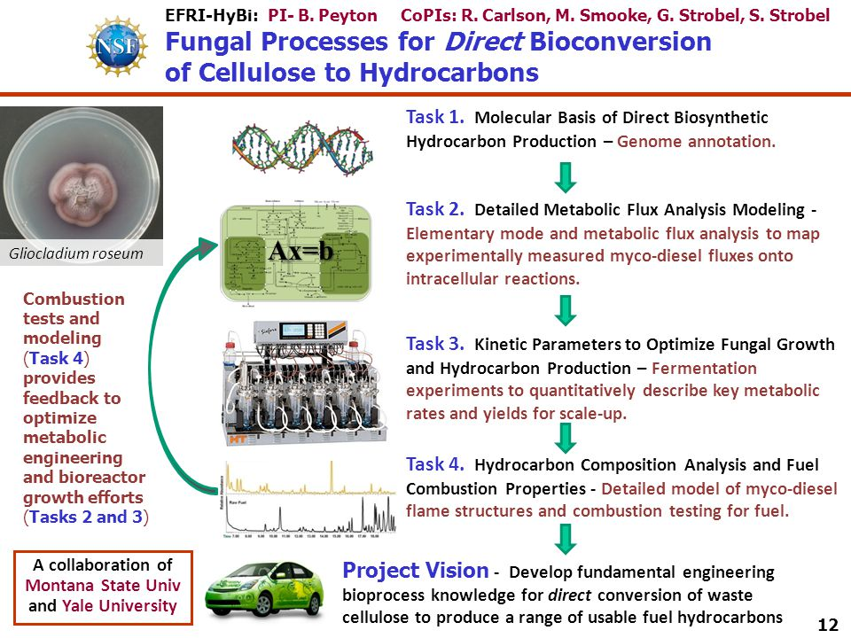EFRI-HyBi: PI- B. Peyton CoPIs: R. Carlson, M. Smooke, G. Strobel, S. Strobel Fungal Processes for Direct Bioconversion of Cellulose to Hydrocarbons T