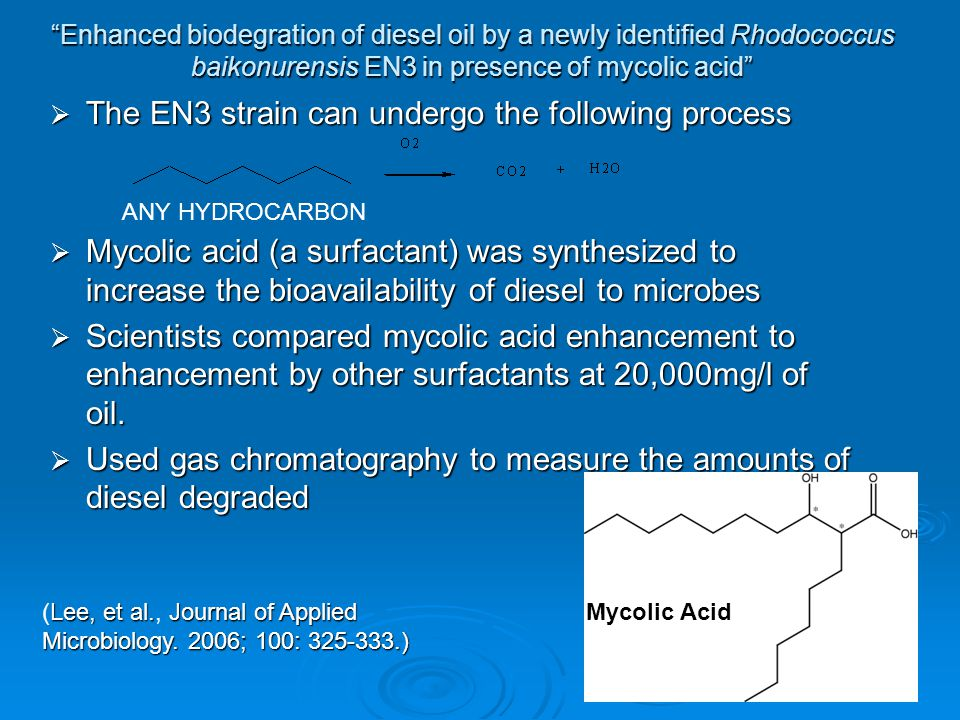 Enhanced biodegration of diesel oil by a newly identified Rhodococcus baikonurensis EN3 in presence of mycolic acid  The EN3 strain can undergo the following process  Mycolic acid (a surfactant) was synthesized to increase the bioavailability of diesel to microbes  Scientists compared mycolic acid enhancement to enhancement by other surfactants at 20,000mg/l of oil.