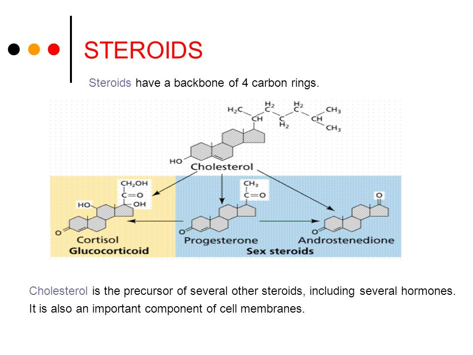 STEROIDS Steroids have a backbone of 4 carbon rings.