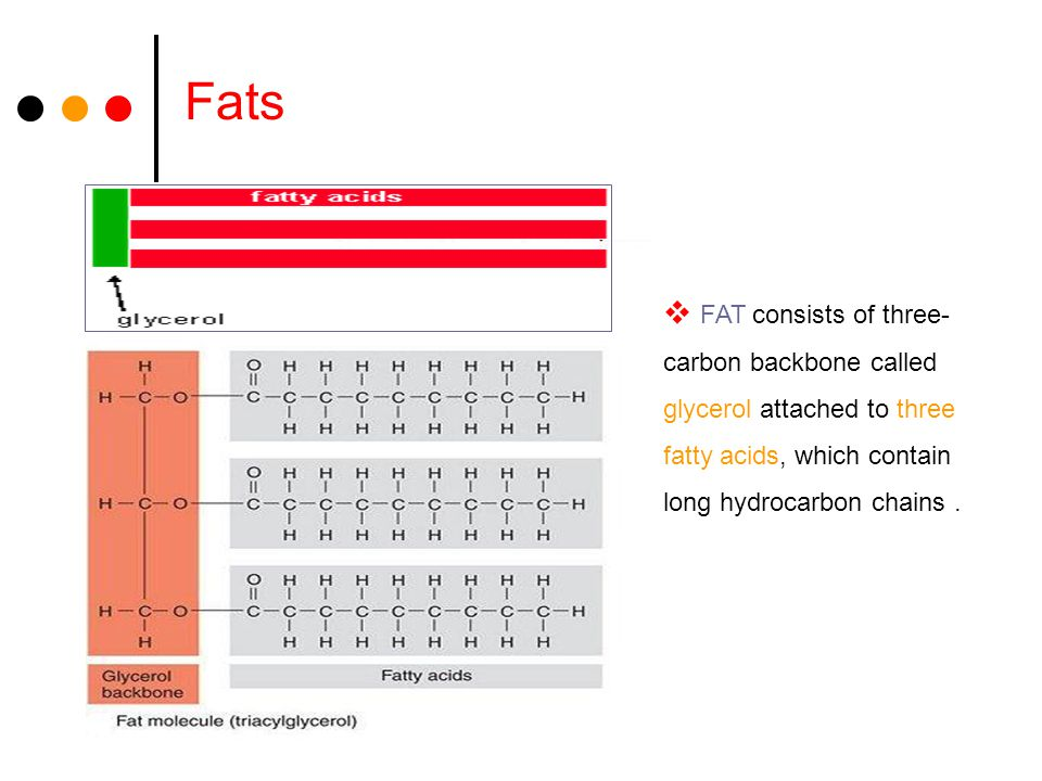 Fats  FAT consists of three- carbon backbone called glycerol attached to three fatty acids, which contain long hydrocarbon chains.