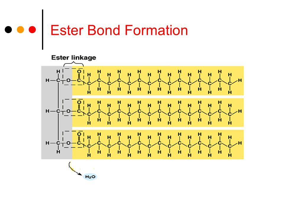 Ester Bond Formation