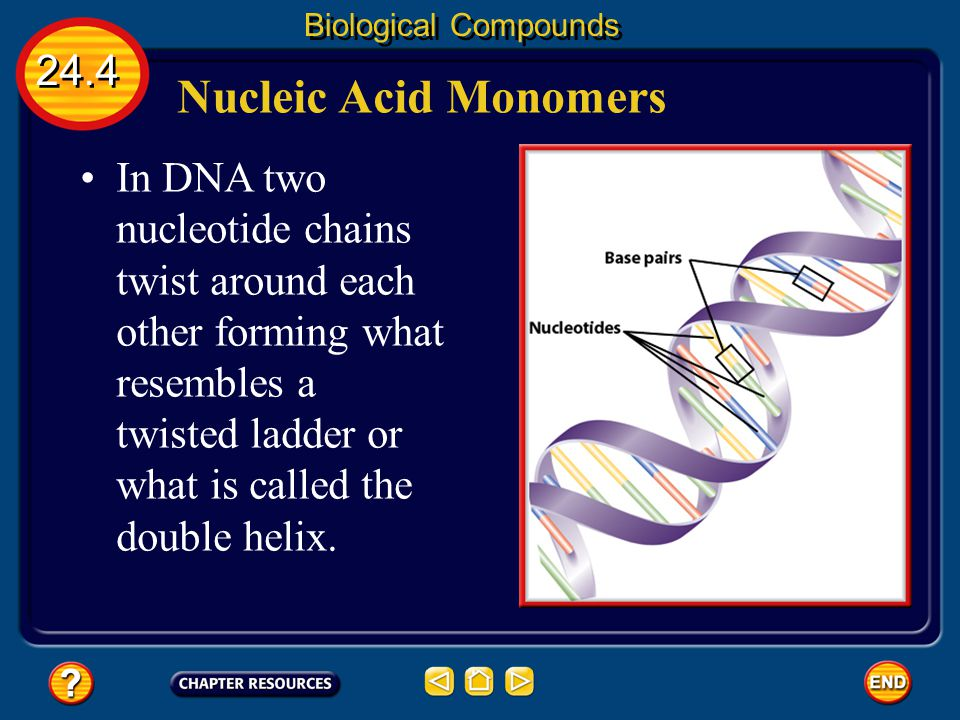 24.4 Biological Compounds Nucleic Acid Monomers The monomers that make up DNA are called nucleotides. Nucleotides are complex molecules containing an