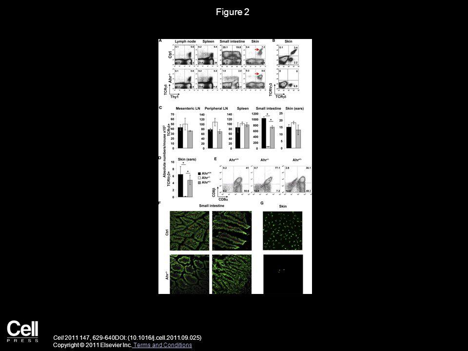 Figure 2 Cell 2011 147, 629-640DOI: (10.1016/j.cell.2011.09.025) Copyright © 2011 Elsevier Inc.