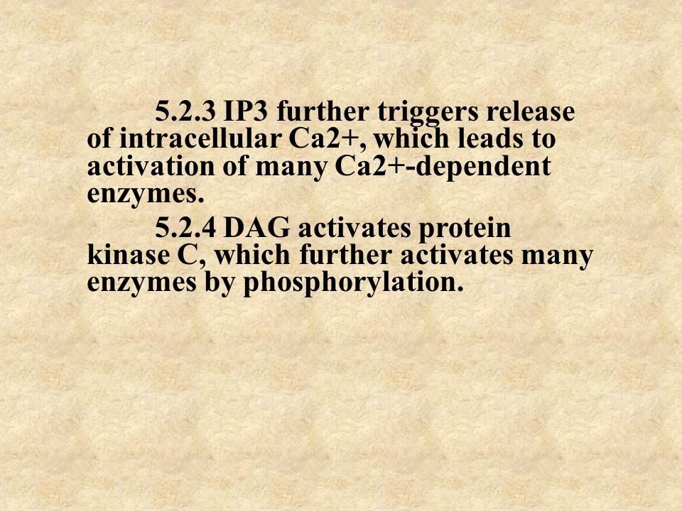 5.2.3 IP3 further triggers release of intracellular Ca2+, which leads to activation of many Ca2+-dependent enzymes. 5.2.4 DAG activates protein kinase