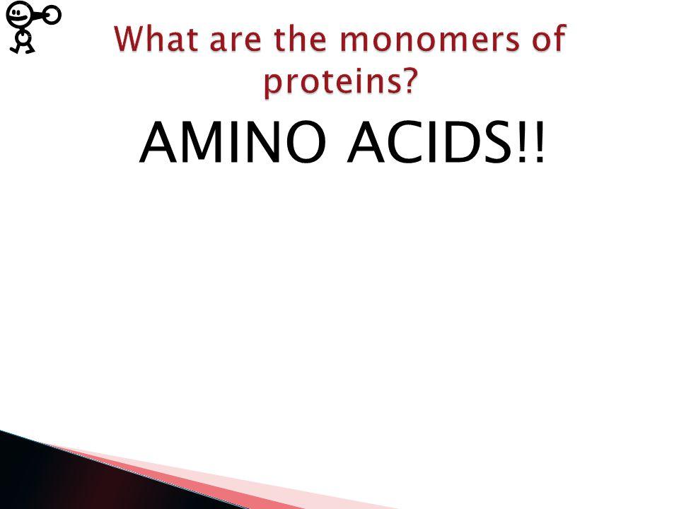 AMINO ACIDS!!