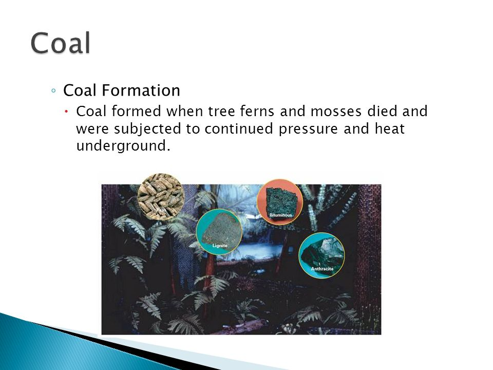 ◦ Coal Formation  Coal formed when tree ferns and mosses died and were subjected to continued pressure and heat underground.