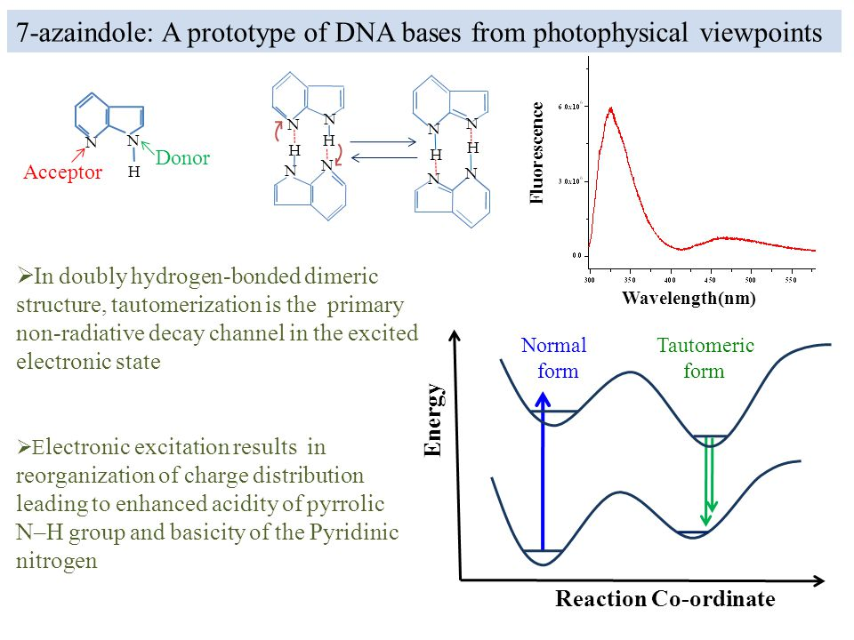  In doubly hydrogen-bonded dimeric structure, tautomerization is the primary non-radiative decay channel in the excited electronic state Wavelength(nm) Fluorescence H N N H N N N N H H N N 7-azaindole: A prototype of DNA bases from photophysical viewpoints H N N Acceptor Donor  E lectronic excitation results in reorganization of charge distribution leading to enhanced acidity of pyrrolic N–H group and basicity of the Pyridinic nitrogen Energy Reaction Co-ordinate Normal form Tautomeric form