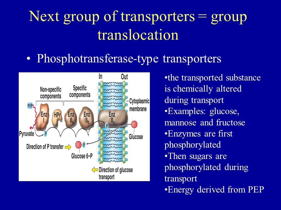 Next group of transporters = group translocation Phosphotransferase-type transporters the transported substance is chemically altered during transport Examples: glucose, mannose and fructose Enzymes are first phosphorylated Then sugars are phosphorylated during transport Energy derived from PEP