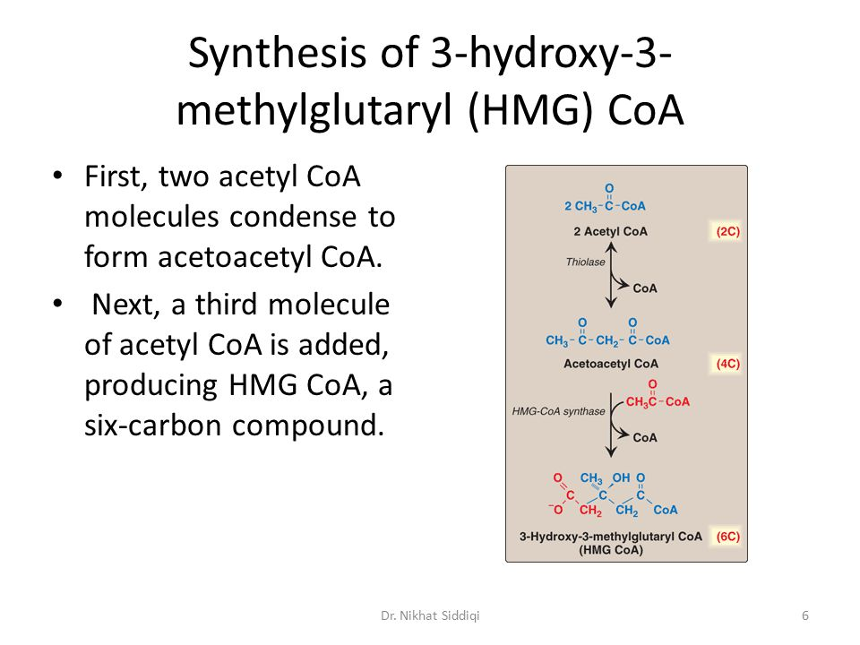 Synthesis of 3-hydroxy-3- methylglutaryl (HMG) CoA First, two acetyl CoA molecules condense to form acetoacetyl CoA. Next, a third molecule of acetyl