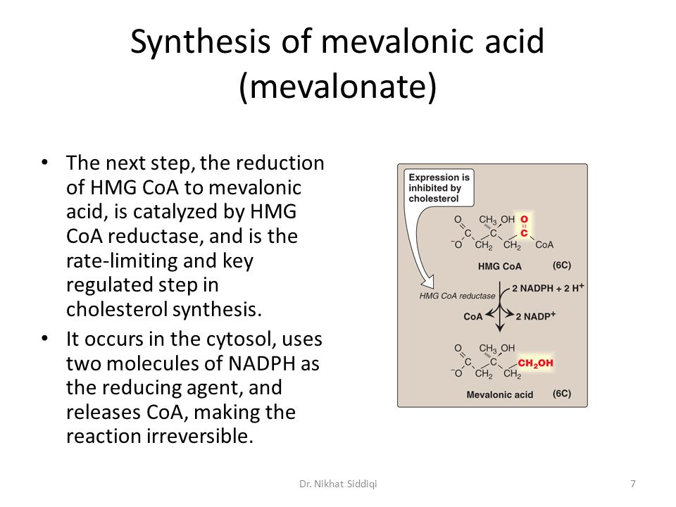 Synthesis of mevalonic acid (mevalonate) The next step, the reduction of HMG CoA to mevalonic acid, is catalyzed by HMG CoA reductase, and is the rate