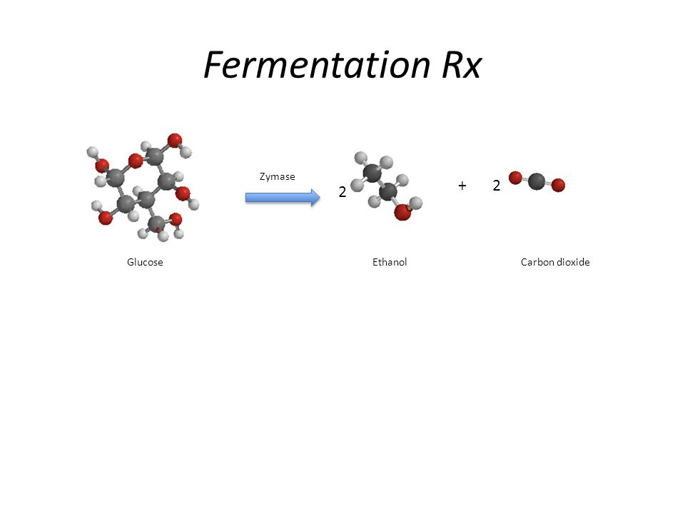 Fermentation Rx + GlucoseEthanolCarbon dioxide Zymase 2 2