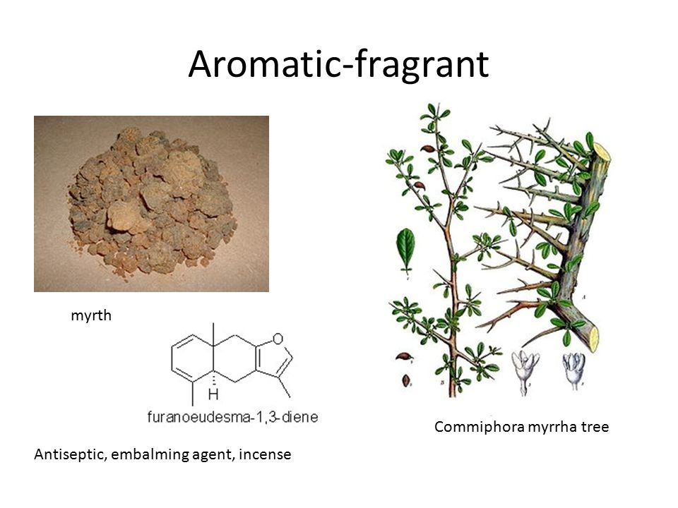 Aromatic-fragrant myrth Commiphora myrrha tree Antiseptic, embalming agent, incense