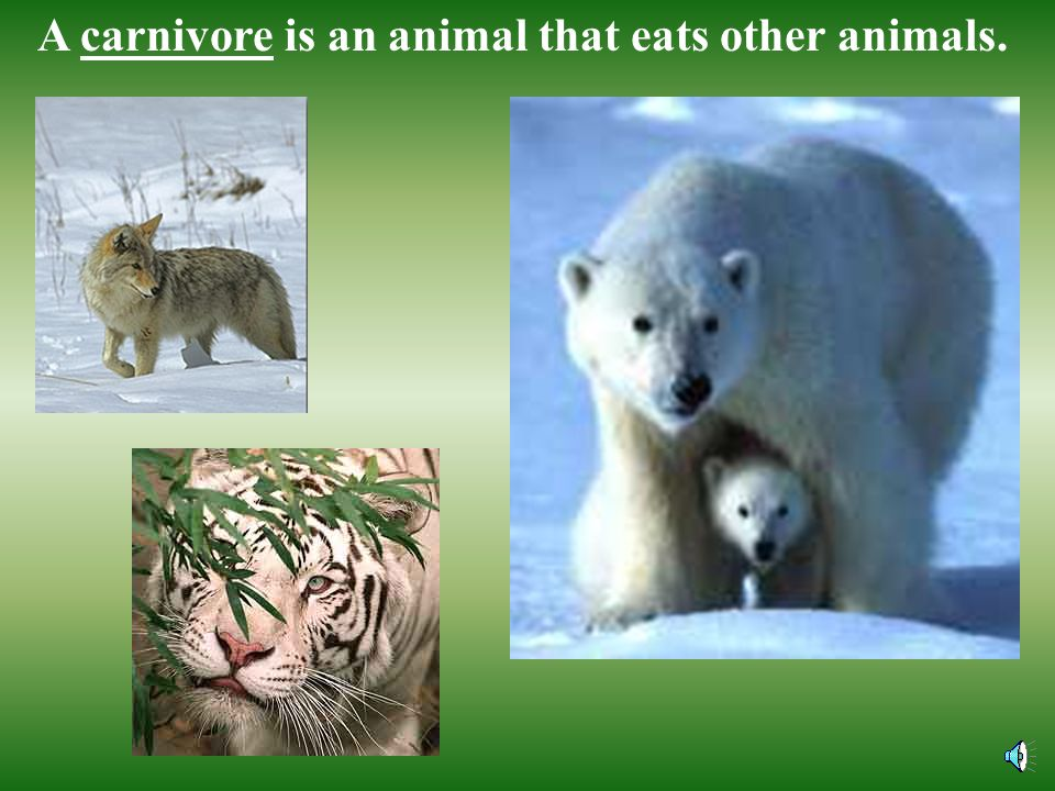 A herbivore is an animal that eats plants.