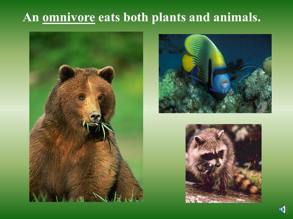 A carnivore is an animal that eats other animals.