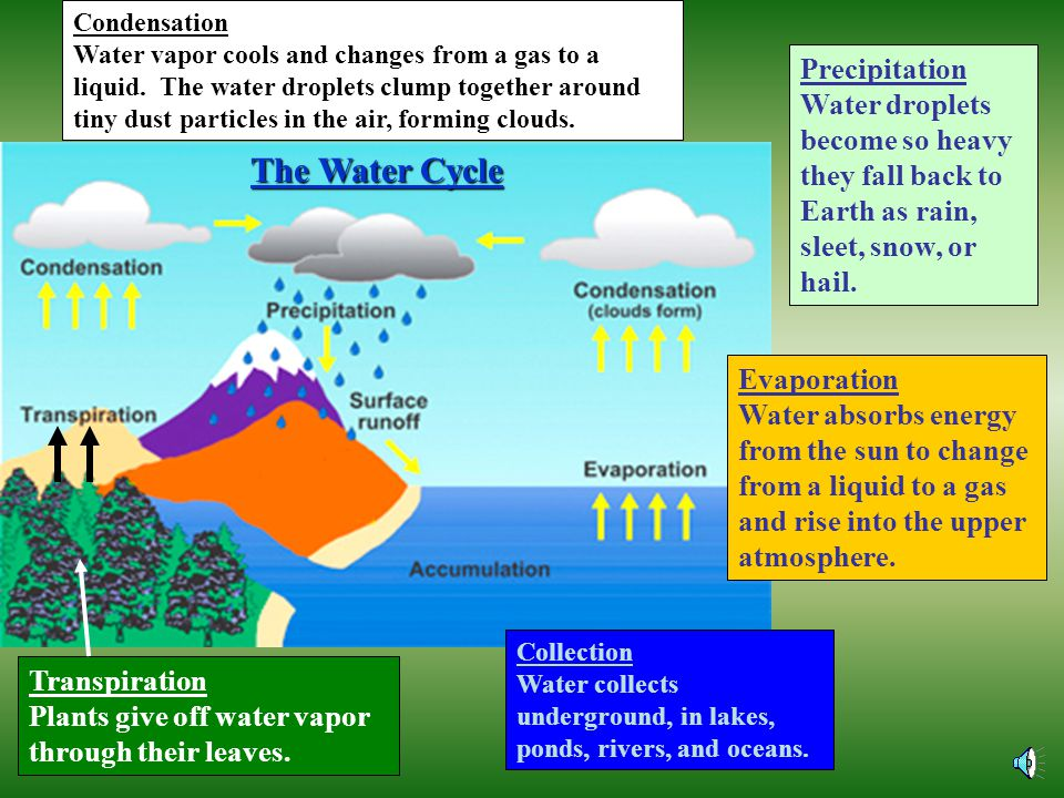 The water cycle, the carbon and oxygen cycle, and the nitrogen cycle are all cycles where energy and matter interact within an ecosystem.