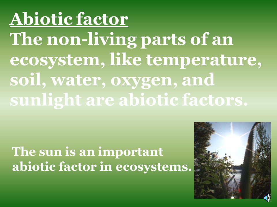 Biotic factor A living part of an ecosystem. Plants are an important biotic factor in ecosystems.