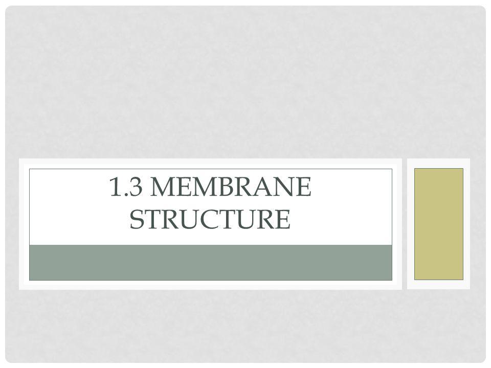 1.3 MEMBRANE STRUCTURE