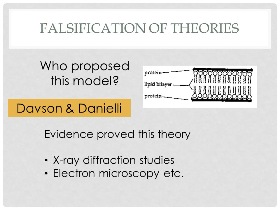 FALSIFICATION OF THEORIES Who proposed this model? Davson & Danielli Evidence proved this theory X-ray diffraction studies Electron microscopy etc.