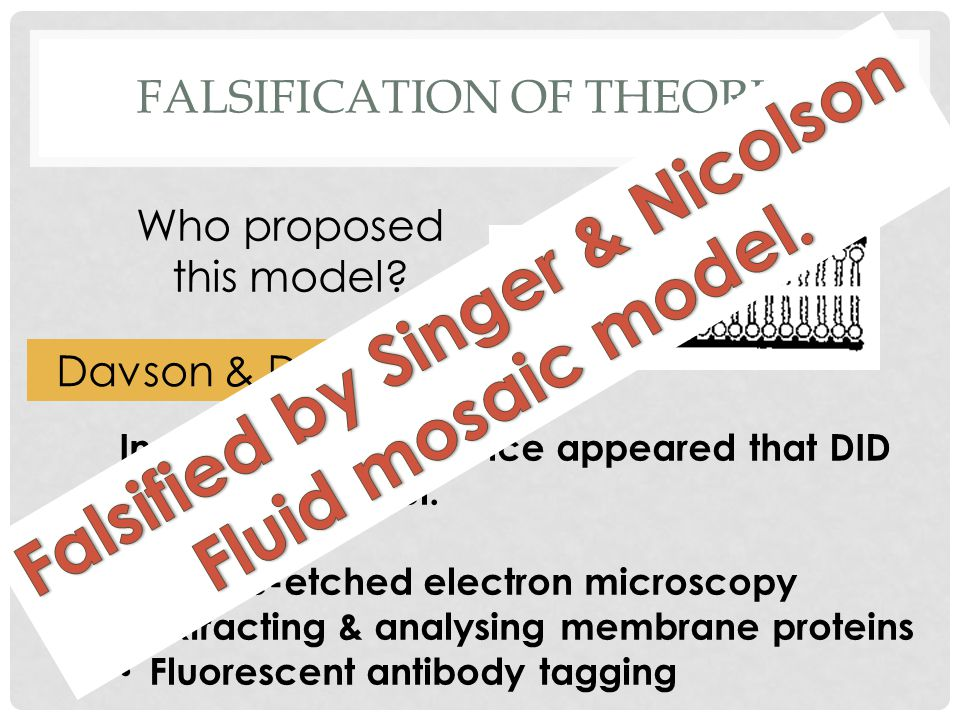 FALSIFICATION OF THEORIES Who proposed this model.