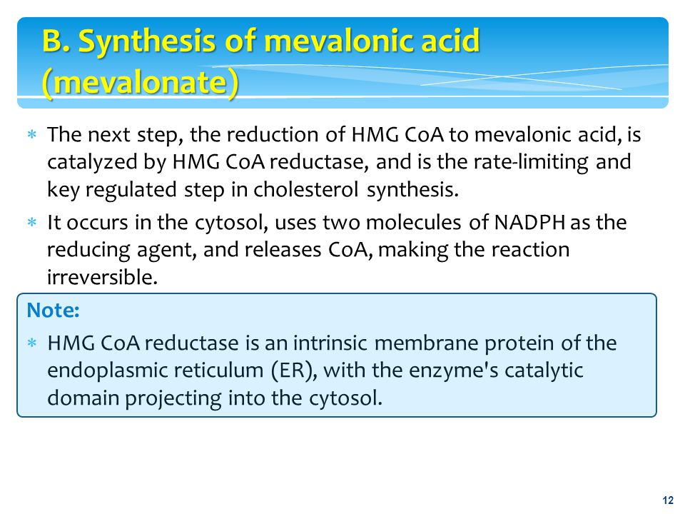  The next step, the reduction of HMG CoA to mevalonic acid, is catalyzed by HMG CoA reductase, and is the rate-limiting and key regulated step in cho