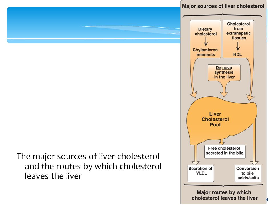 The major sources of liver cholesterol and the routes by which cholesterol leaves the liver 4