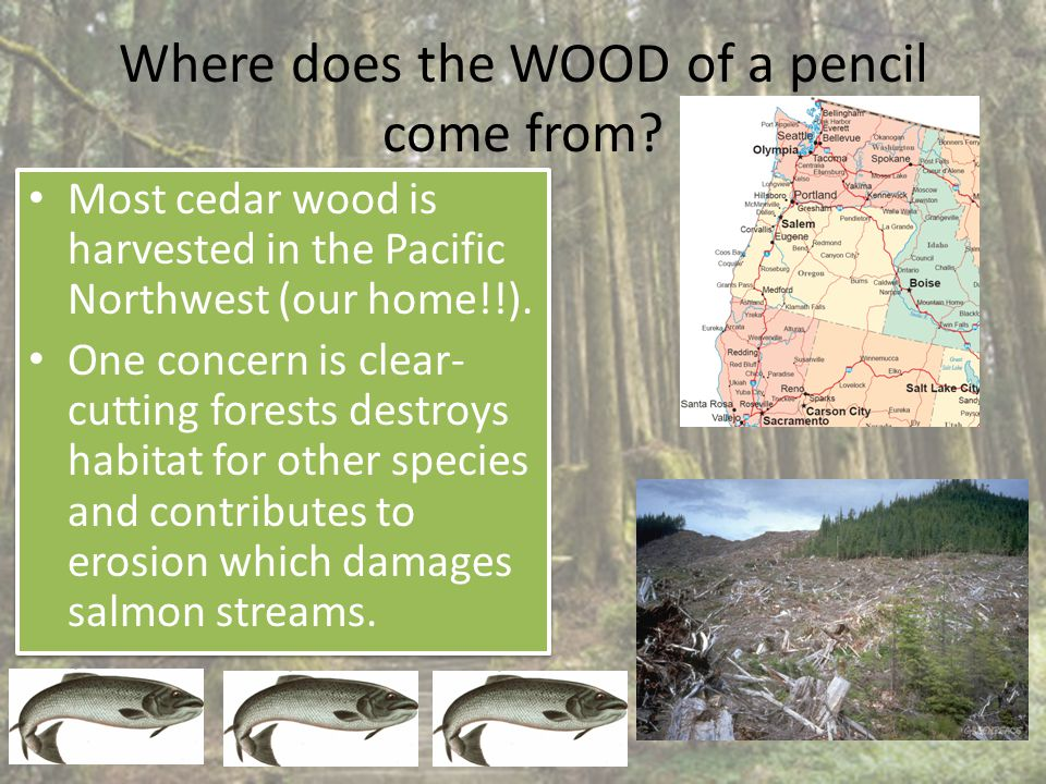 Where does the WOOD of a pencil come from.