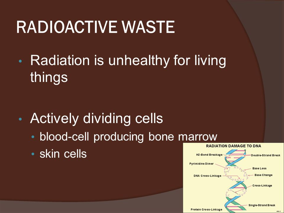 RADIOACTIVE WASTE Radiation is unhealthy for living things Actively dividing cells blood-cell producing bone marrow skin cells